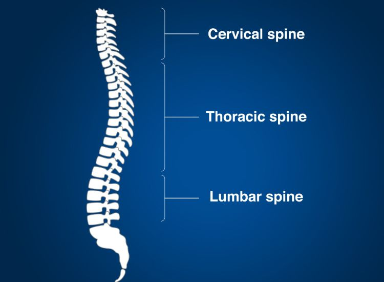 north-american-spine-image3
